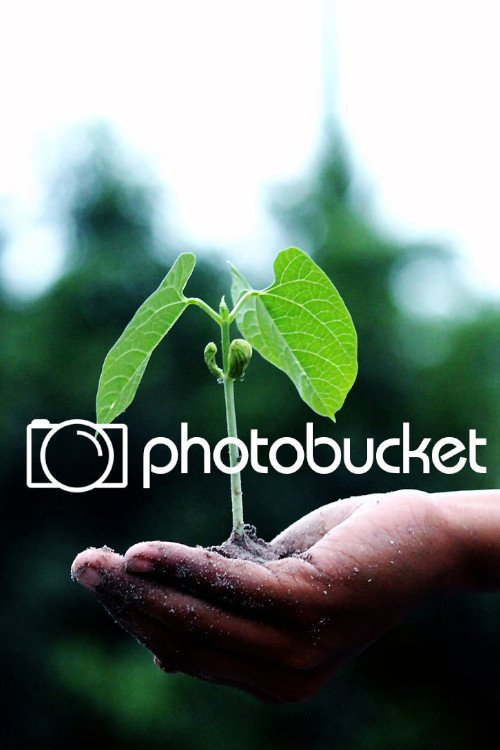 Sites Like Photobucket Best Alternatives 2020